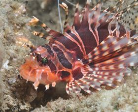 The Seaway Dive Site