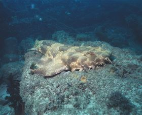 Scottish Prince Dive Site