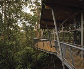 Tarkine Forest Adventures - Dismal Swamp - Wagga Wagga Accommodation