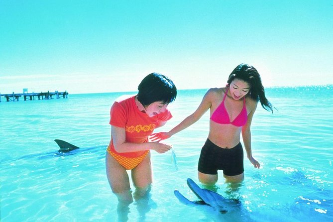 Monkey Mia Dolphins  Shark Bay Air Tour From Perth - Wagga Wagga Accommodation