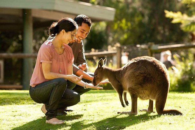 Very Best of Perth Tour - Wildlife Park  City Highlights Tour - Wagga Wagga Accommodation