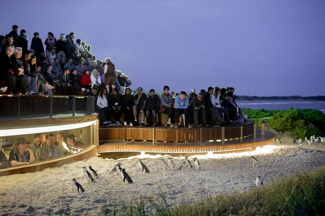 1 Day Private Phillip Island Tour VIP Charter up to 9 People - Wagga Wagga Accommodation