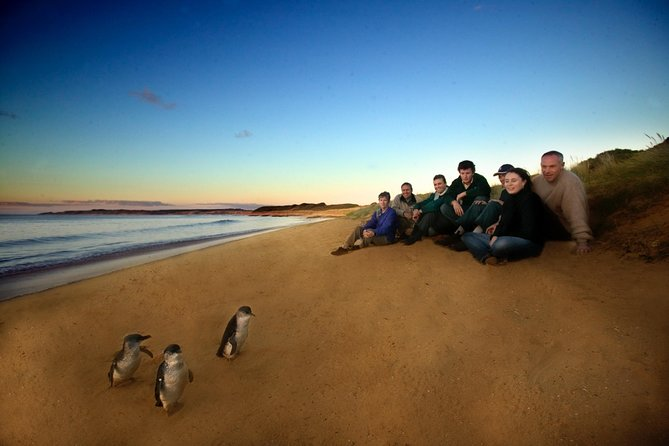 Phillip Island Ultimate Penguin Eco Tour or Skybox Experience - Wagga Wagga Accommodation