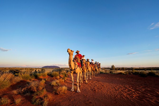 Uluru Camel Express Sunrise or Sunset Tours - Wagga Wagga Accommodation