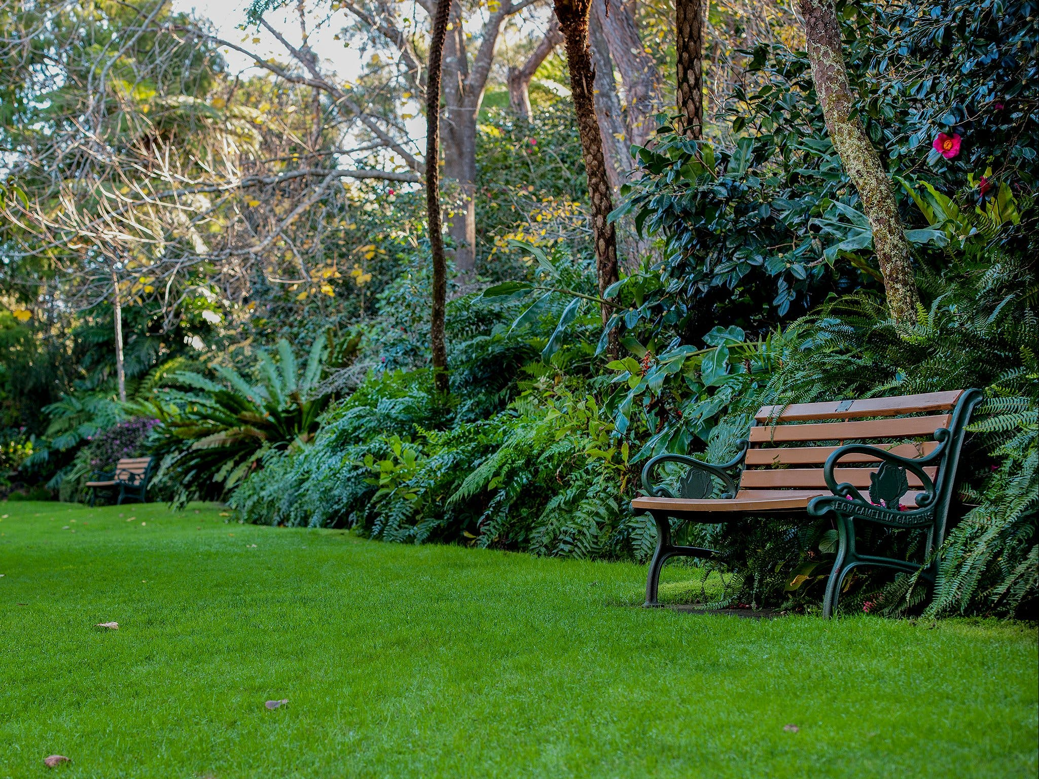 EG Waterhouse National Camellia Gardens - Wagga Wagga Accommodation