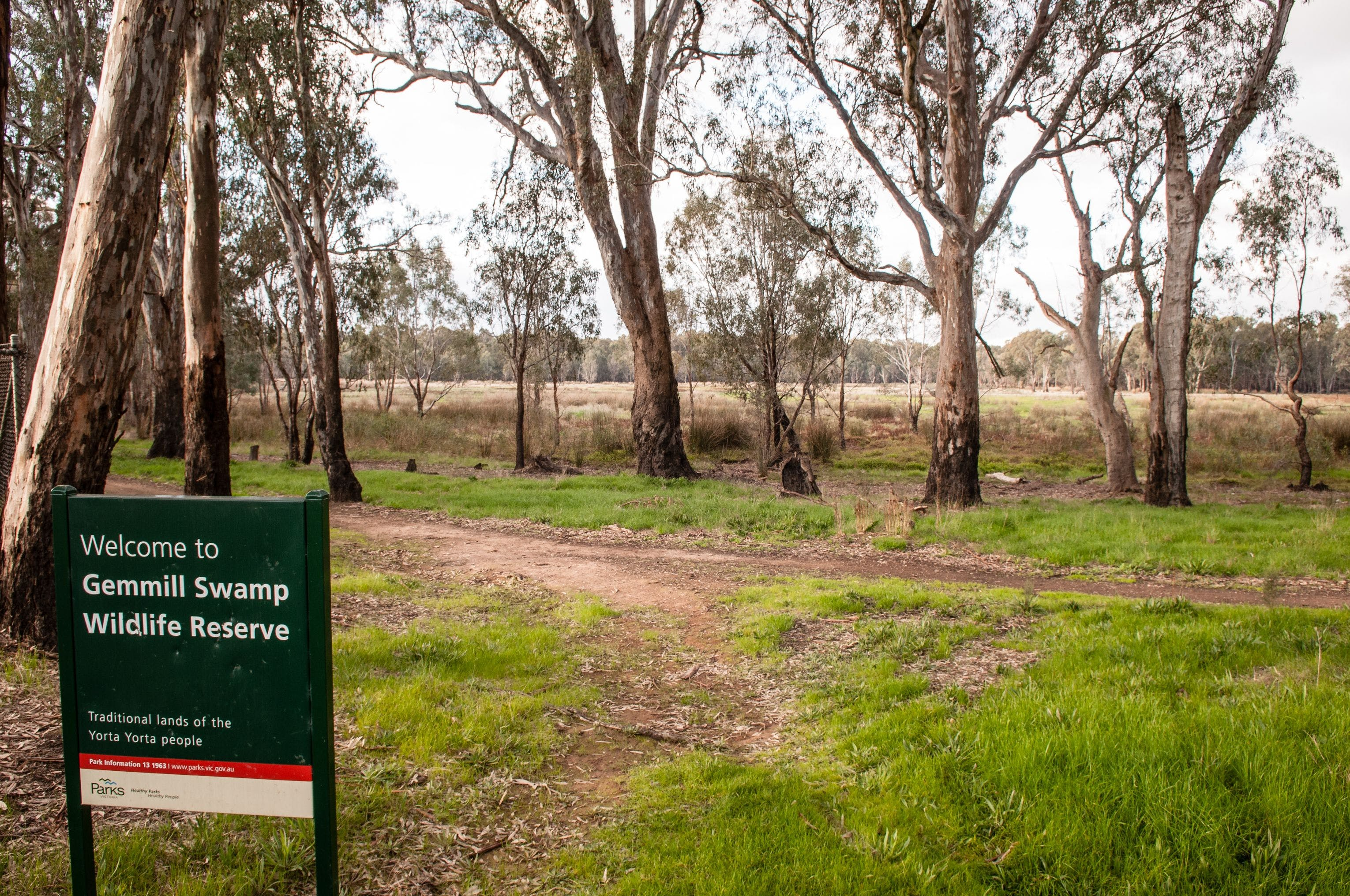 Gemmill Swamp Wildlife Reserve - Wagga Wagga Accommodation