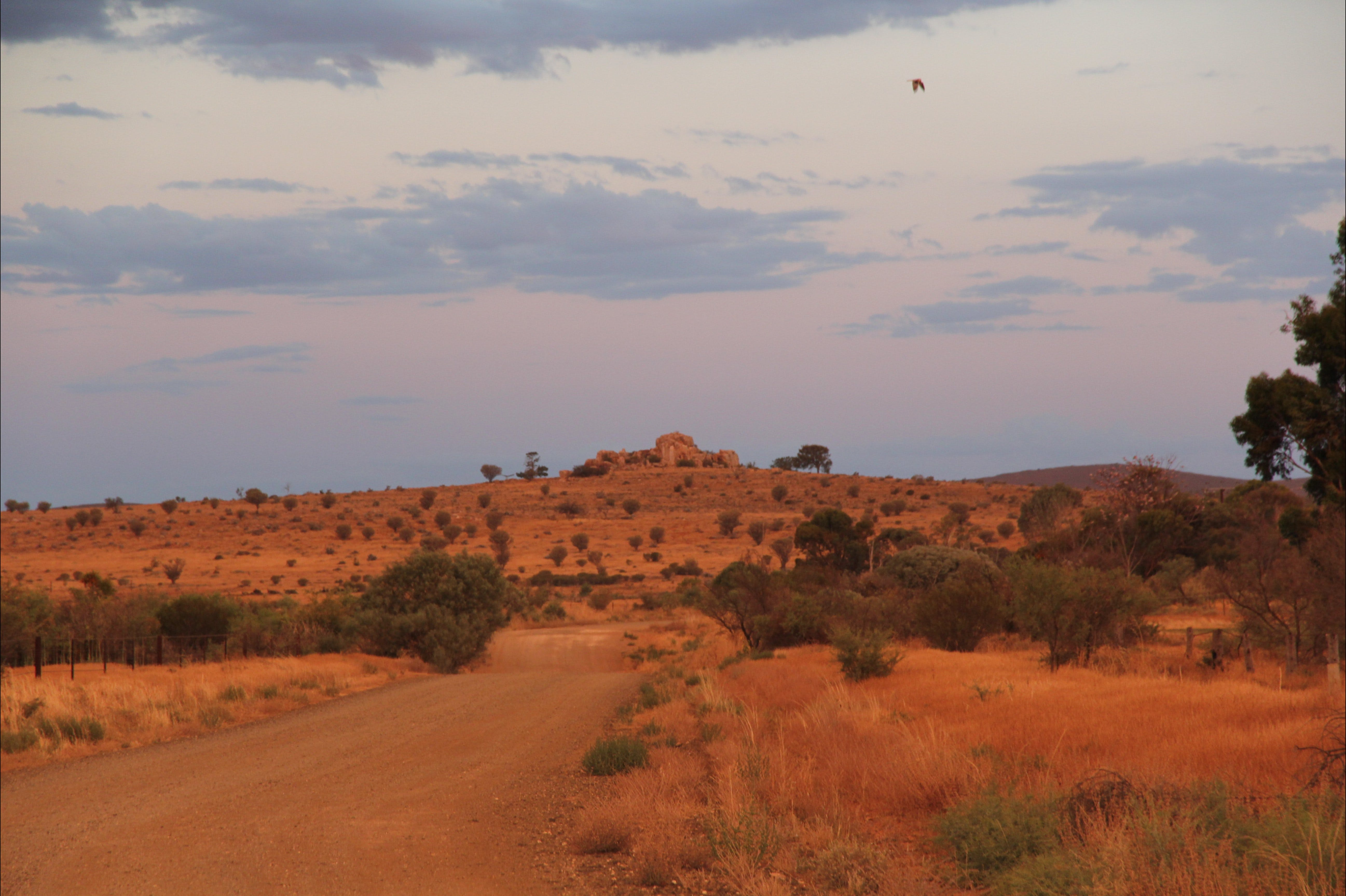 Castle Rock walk and Lookout - Wagga Wagga Accommodation