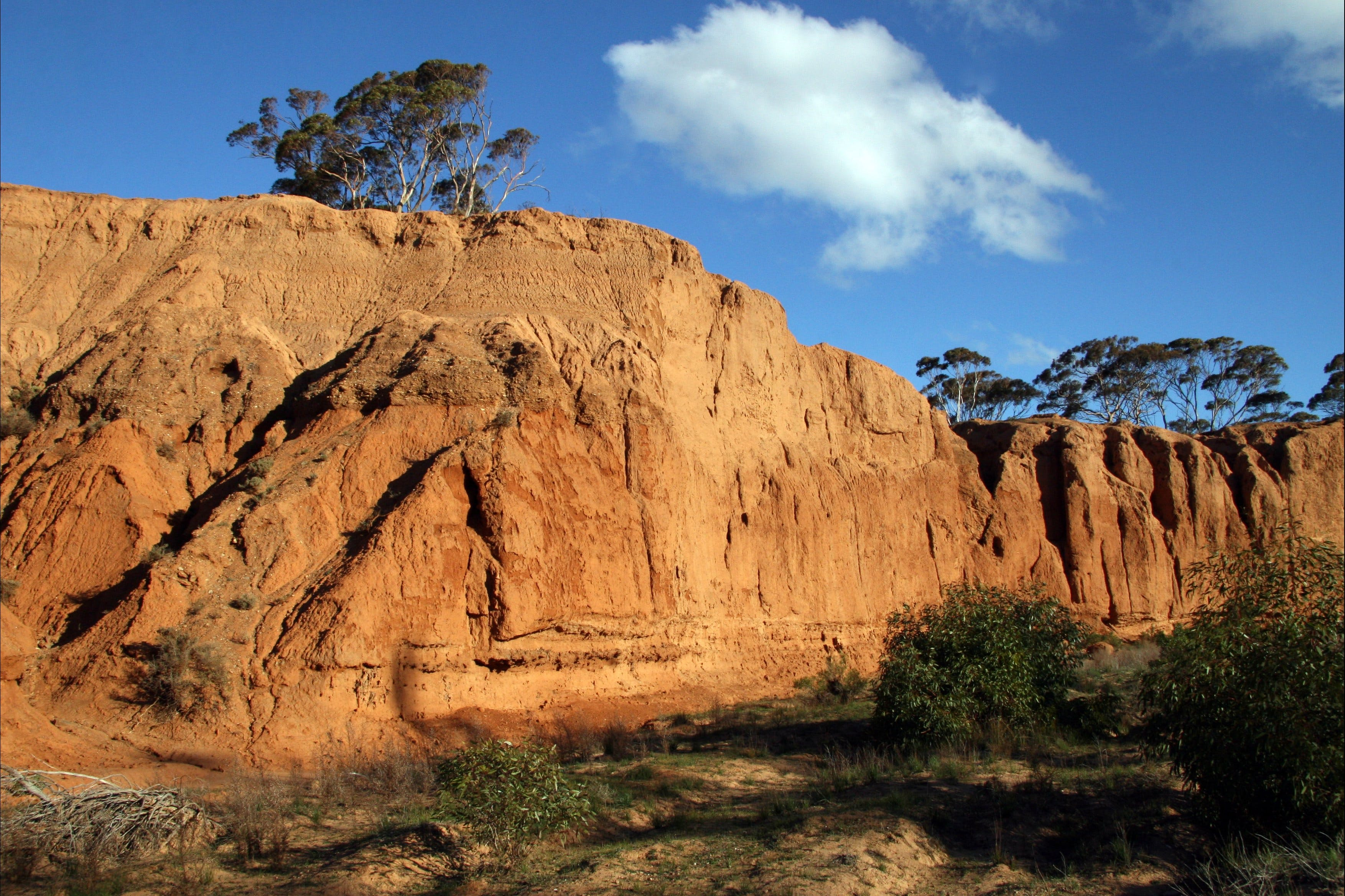 Red Banks Conservation Park - Wagga Wagga Accommodation
