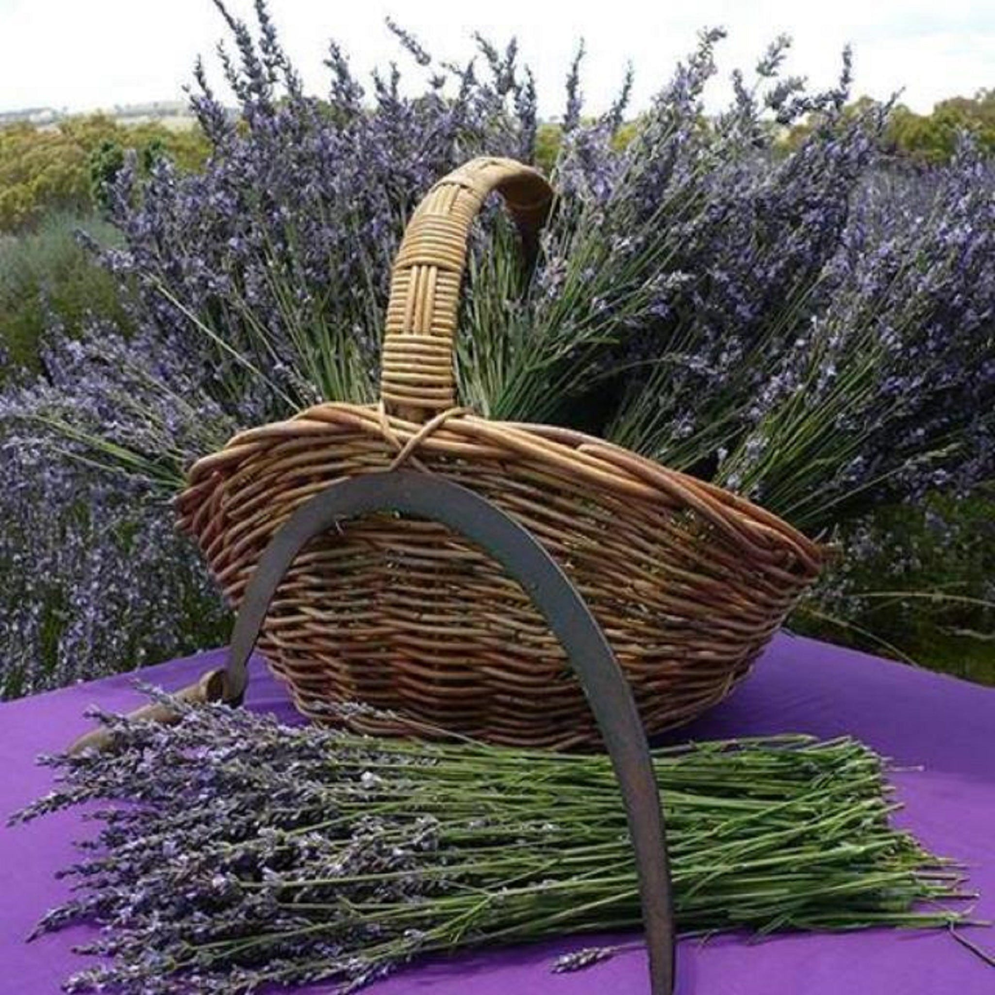 Rustique Lavender Farm - Wagga Wagga Accommodation