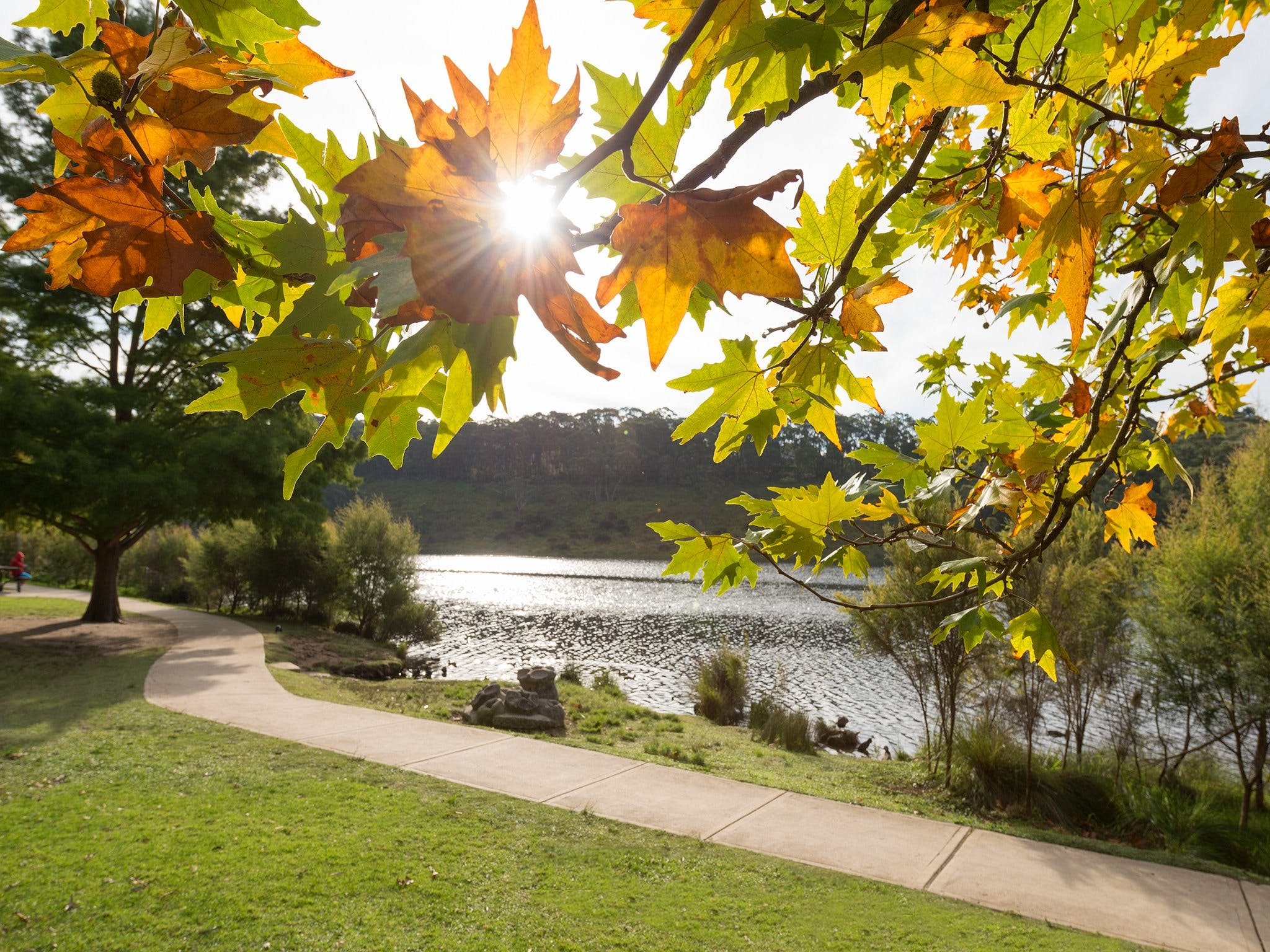 Wentworth Falls Lake - Wagga Wagga Accommodation