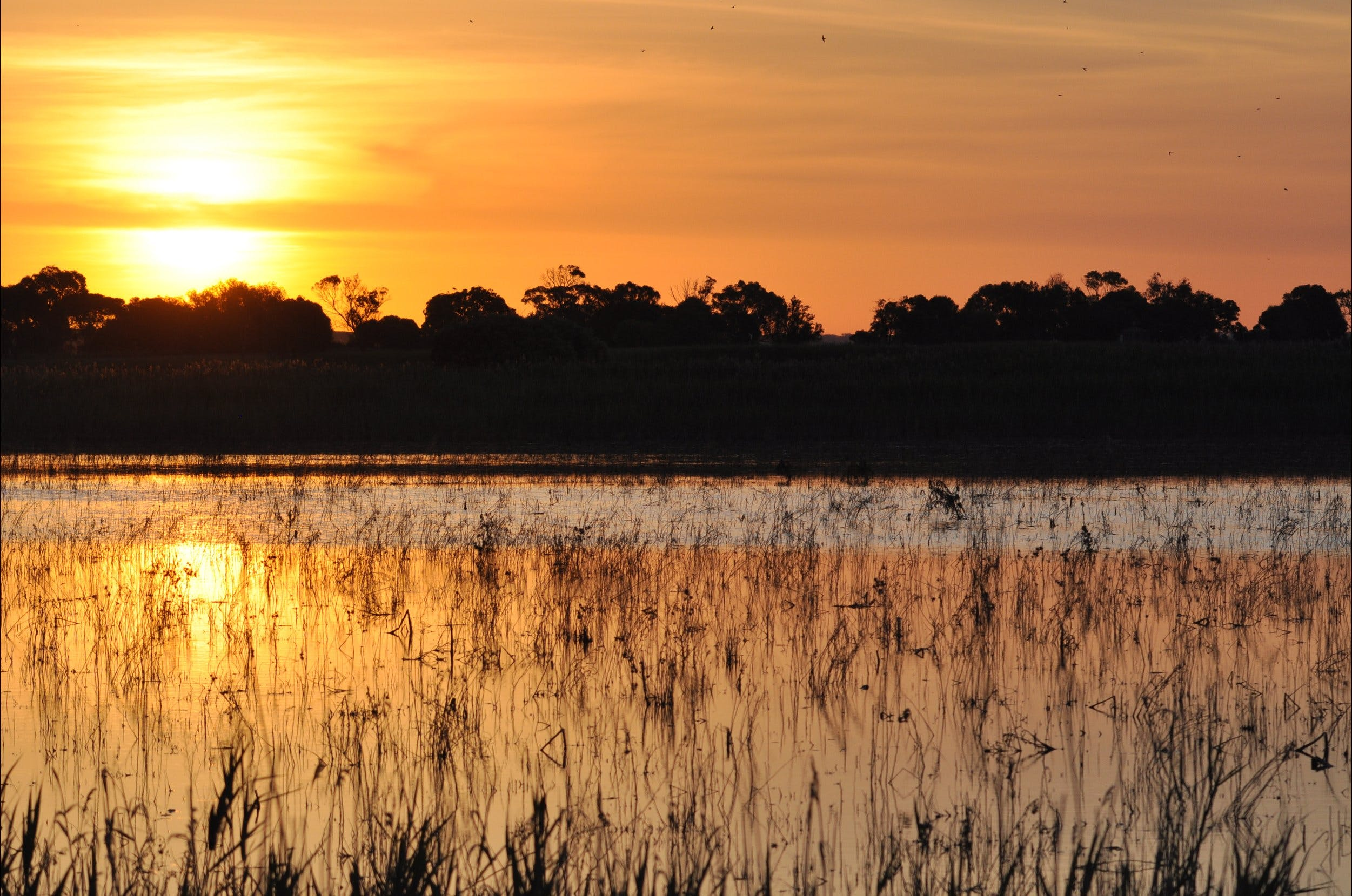 Bool Lagoon Game Reserve and Hacks Lagoon Conservation Park - Wagga Wagga Accommodation