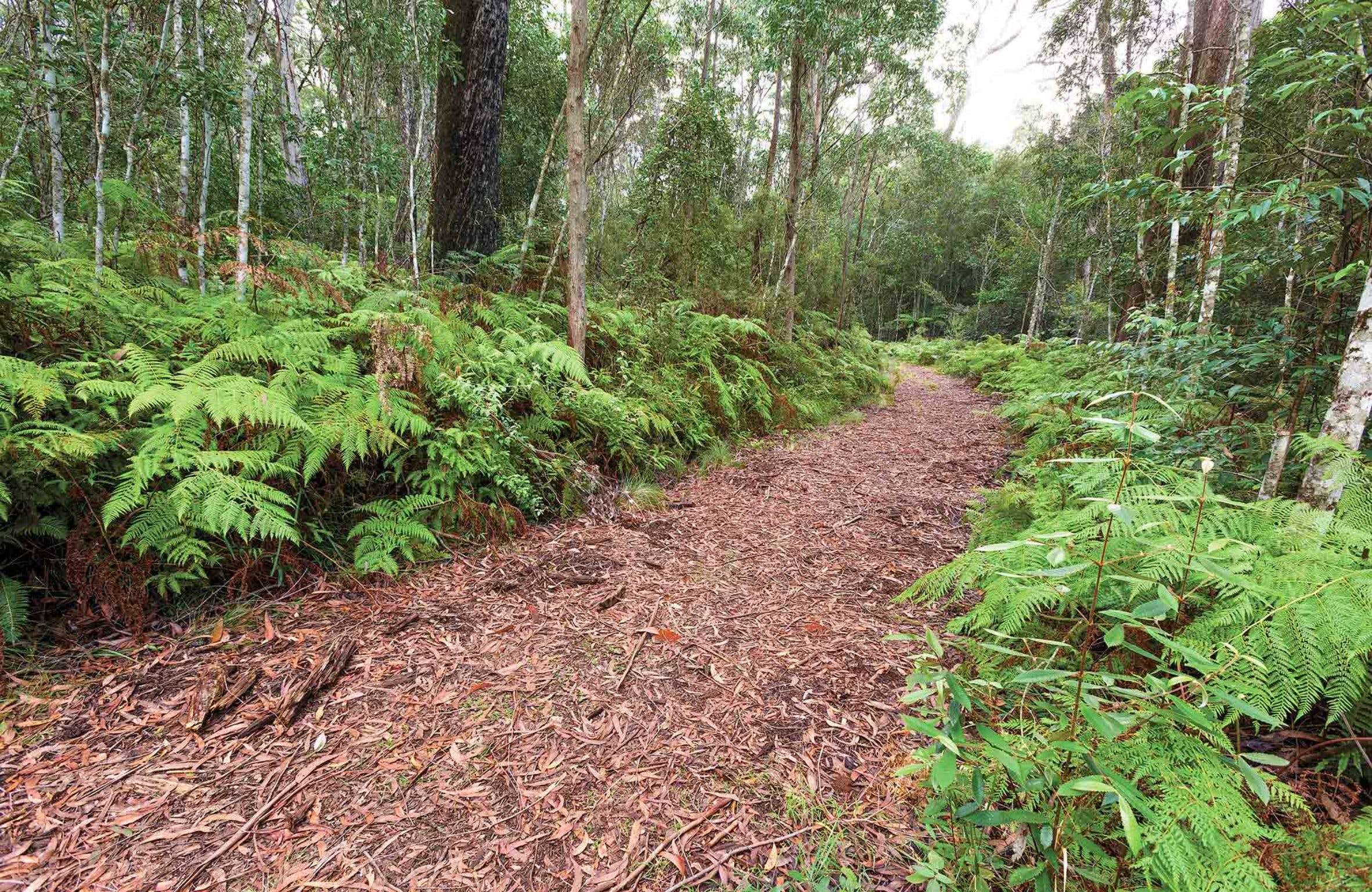 Forest Walking Track Gibraltar Range National Park - Wagga Wagga Accommodation