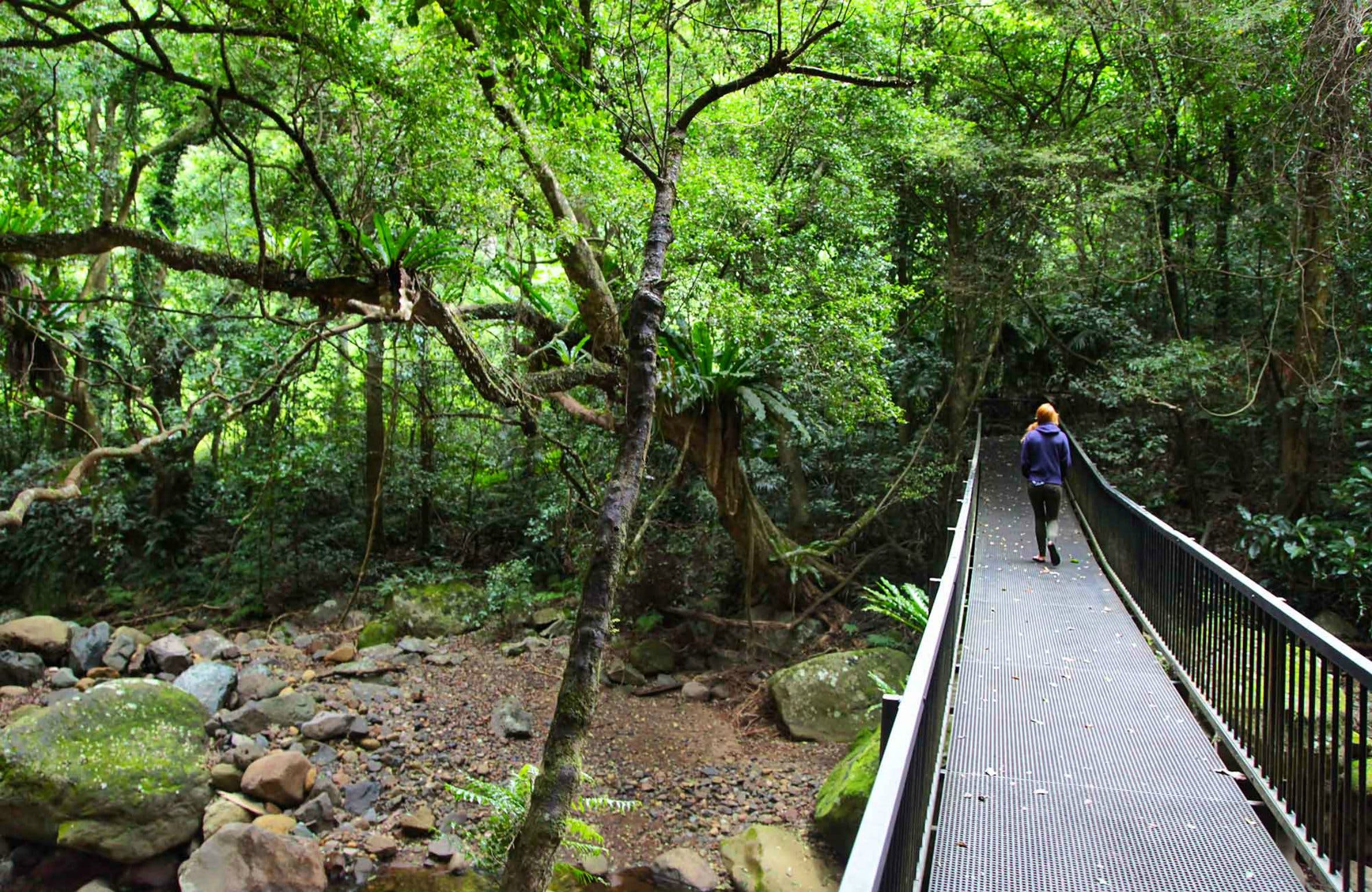 Rainforest Loop Walk Budderoo National Park - Wagga Wagga Accommodation