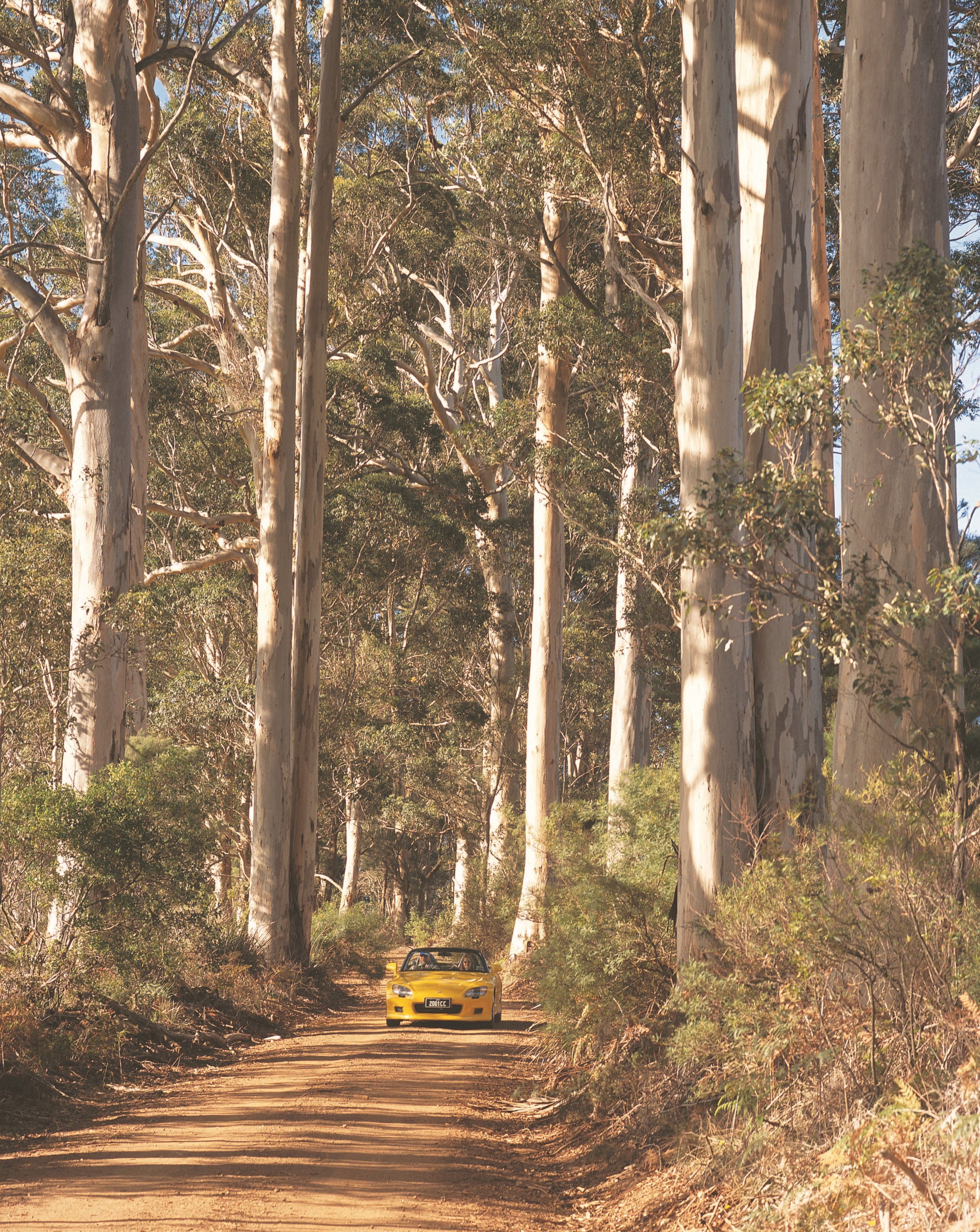 The Great Forest Trees Drive - Wagga Wagga Accommodation