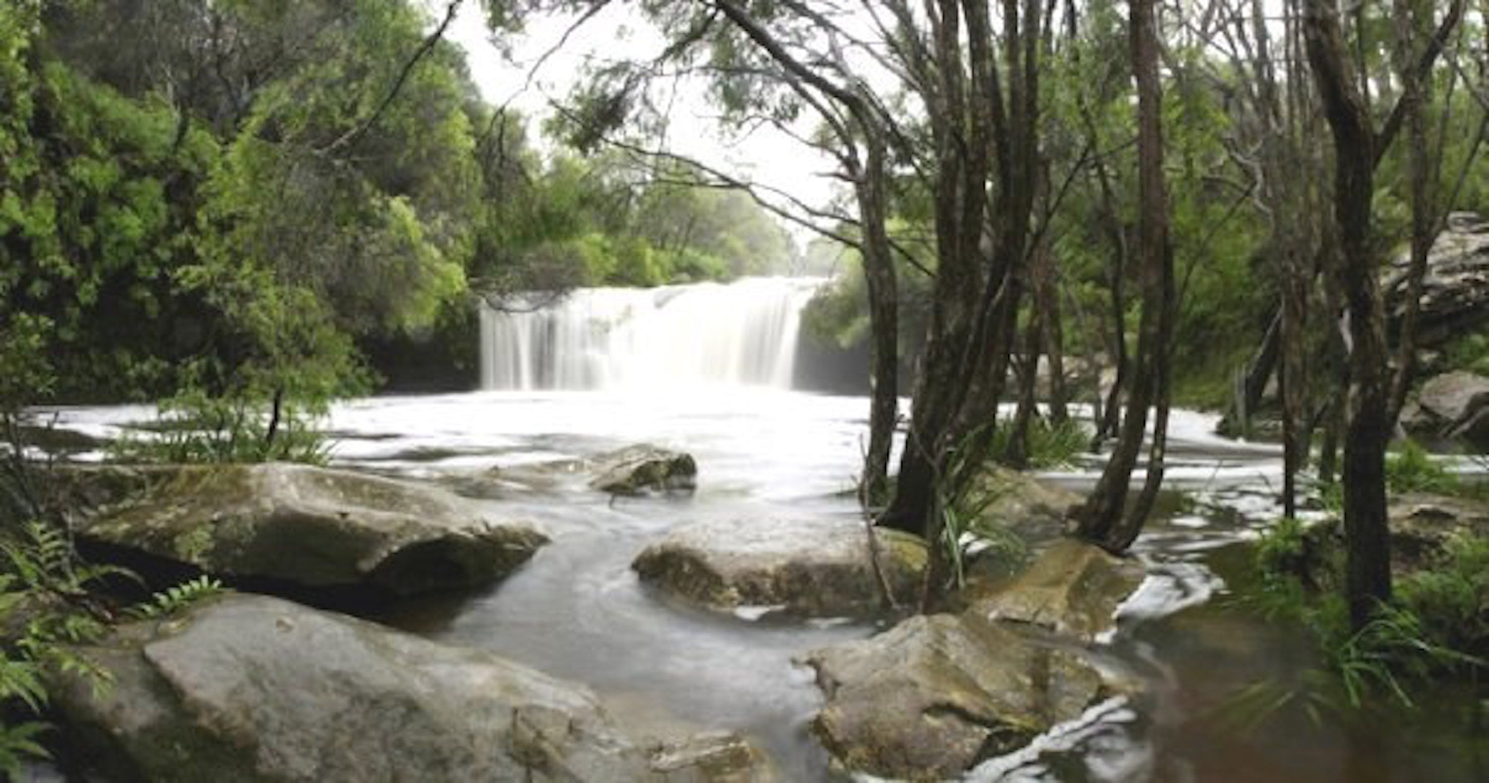 Nellies Glen Carrington Falls - Wagga Wagga Accommodation