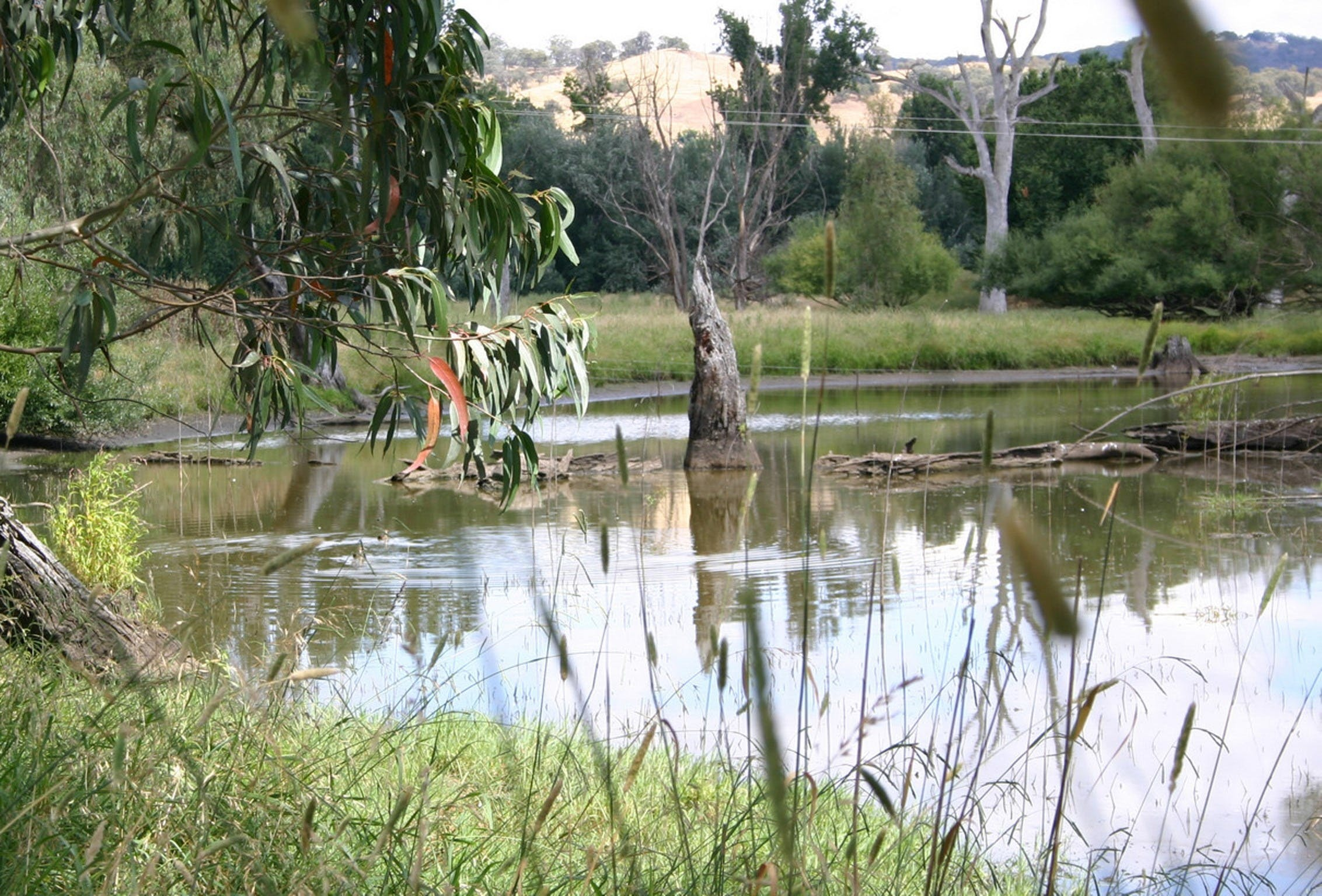 Tumut Wetlands - Wagga Wagga Accommodation