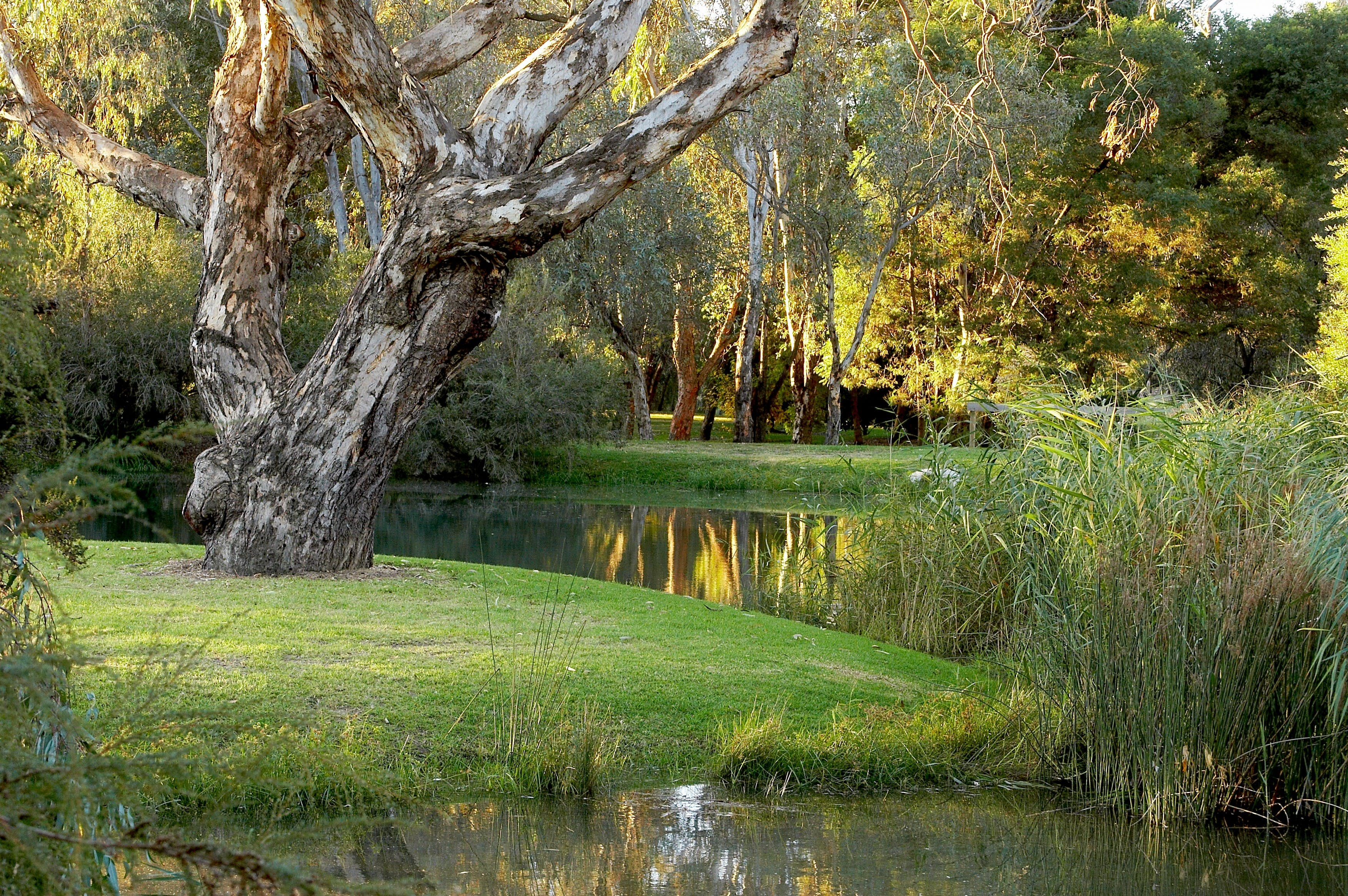 Gateway Island Parklands - Wagga Wagga Accommodation