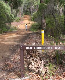 Old Timberline and Sidings Rail Trails - Wagga Wagga Accommodation