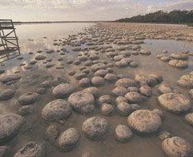 Lake Clifton Thrombolites - Wagga Wagga Accommodation