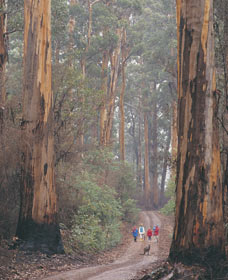 Beedelup National Park - Wagga Wagga Accommodation