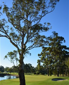 Ryde-Parramatta Golf Club - Wagga Wagga Accommodation