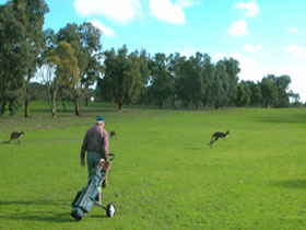 Coffin Bay Golf Club - Wagga Wagga Accommodation
