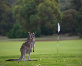 Anglesea Golf Club - Wagga Wagga Accommodation