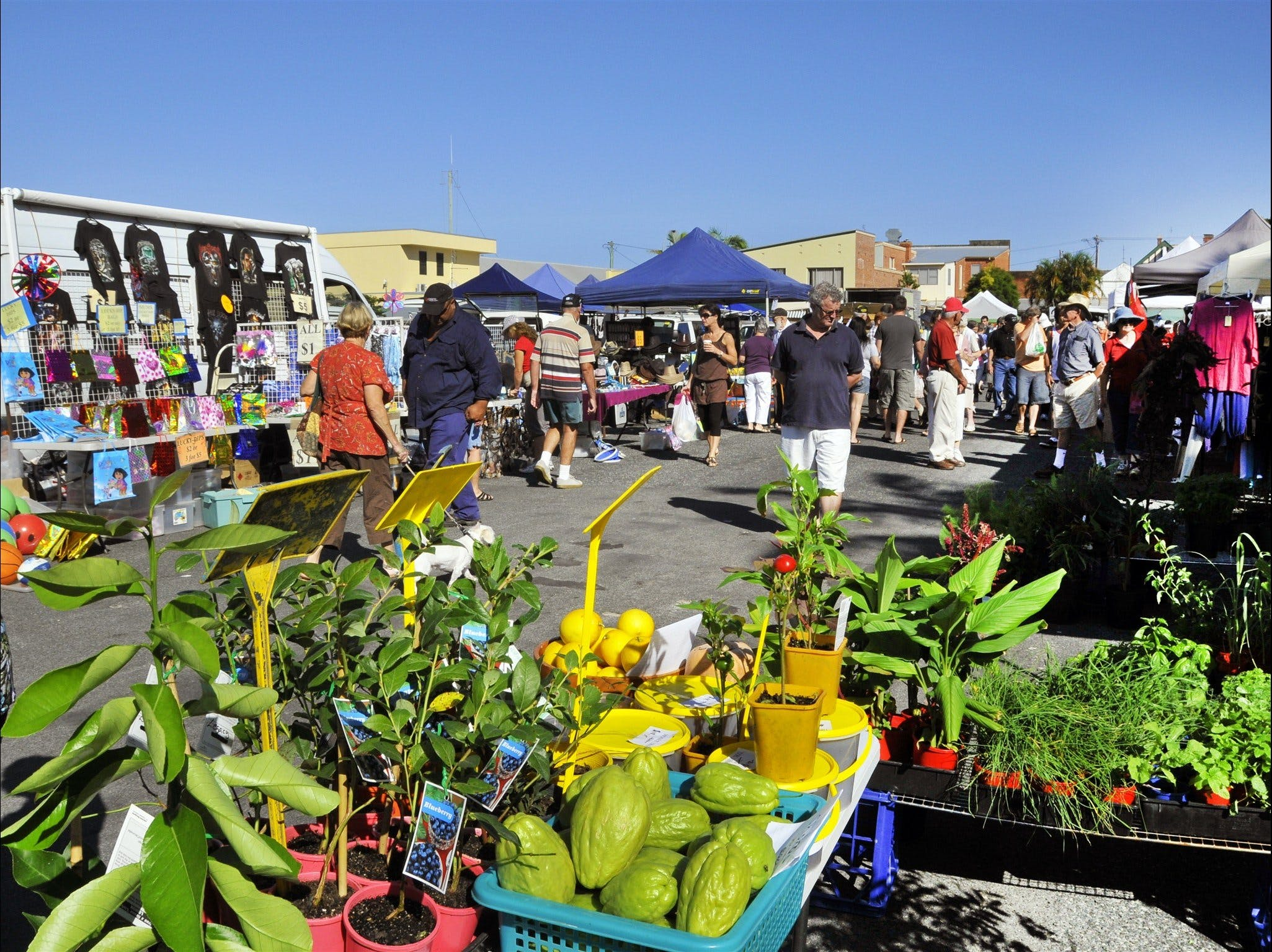 Maclean Community Monthly Markets - Wagga Wagga Accommodation