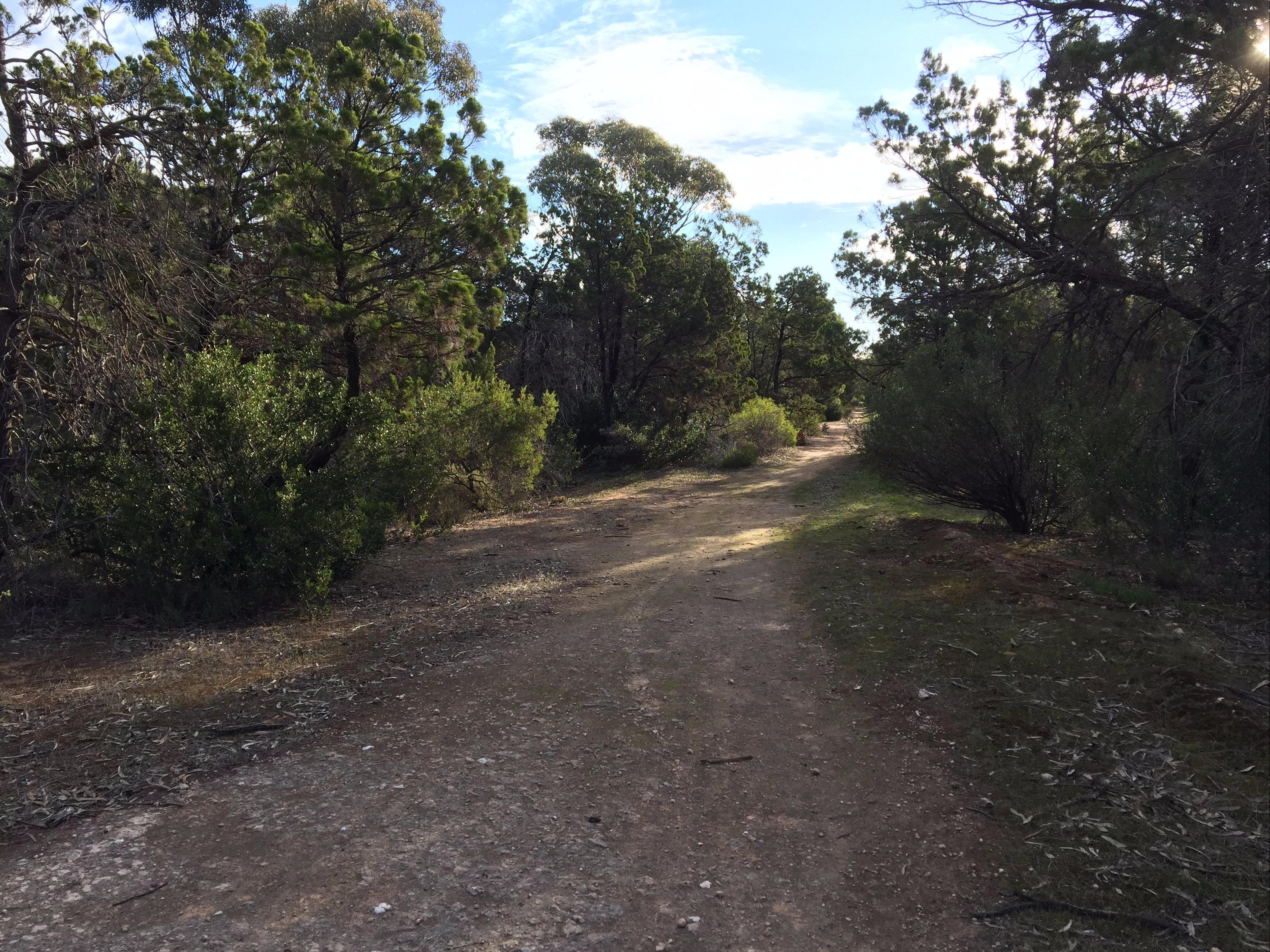 Victoria Park Moonta monthly walks - Wagga Wagga Accommodation
