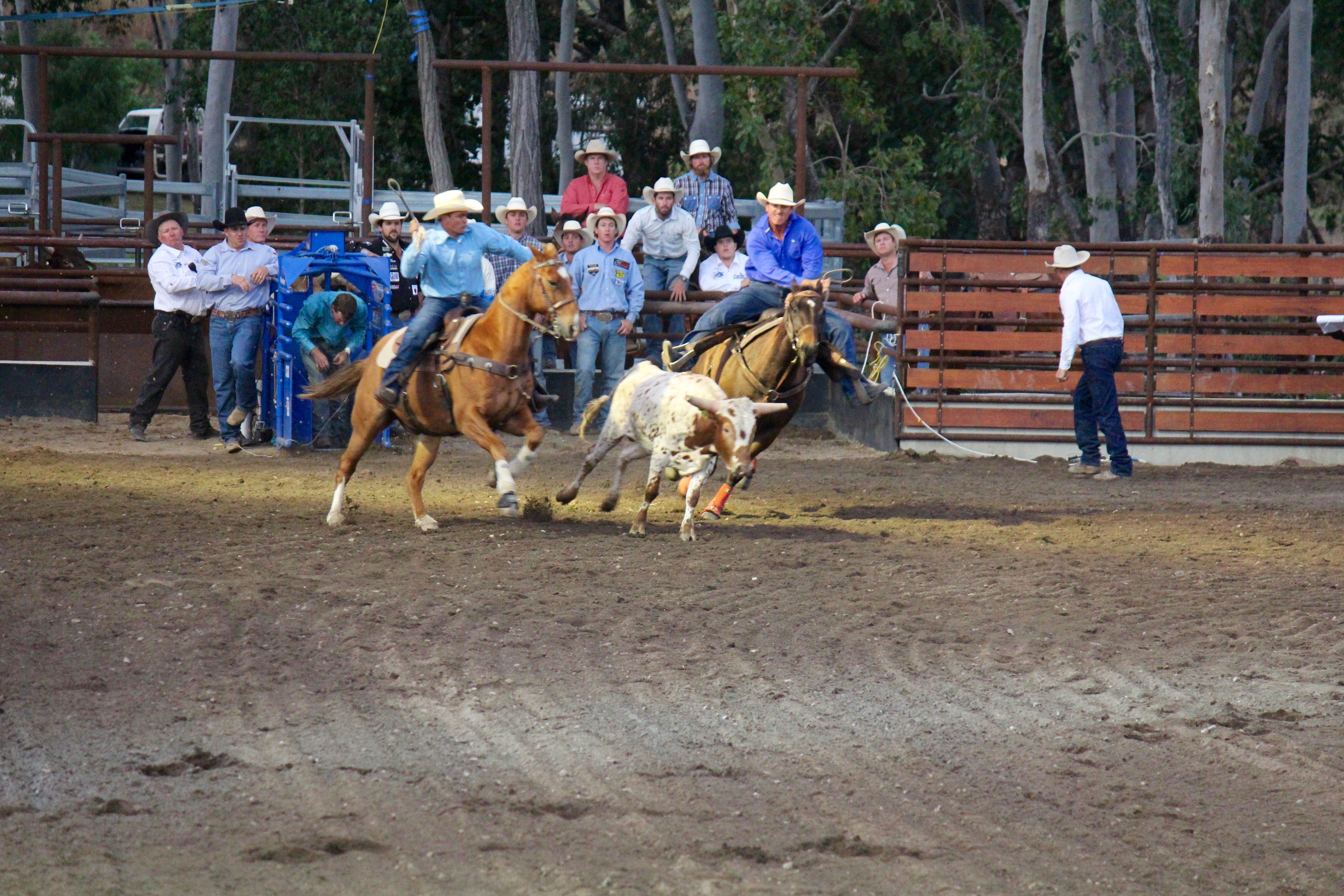 North Queensland Elite Rodeo - Wagga Wagga Accommodation