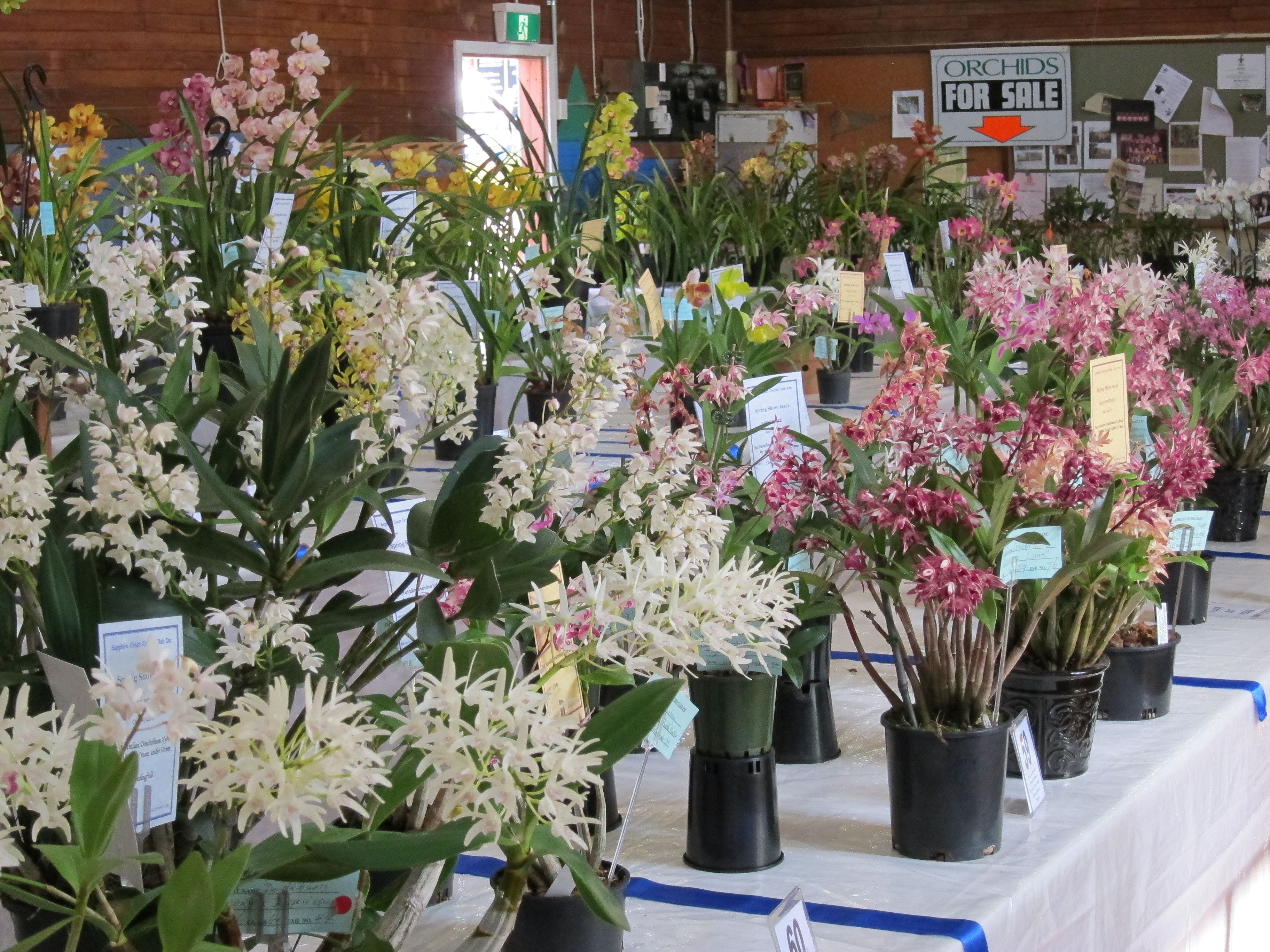Sapphire Coast Orchid Club Spring Orchid Show - Wagga Wagga Accommodation