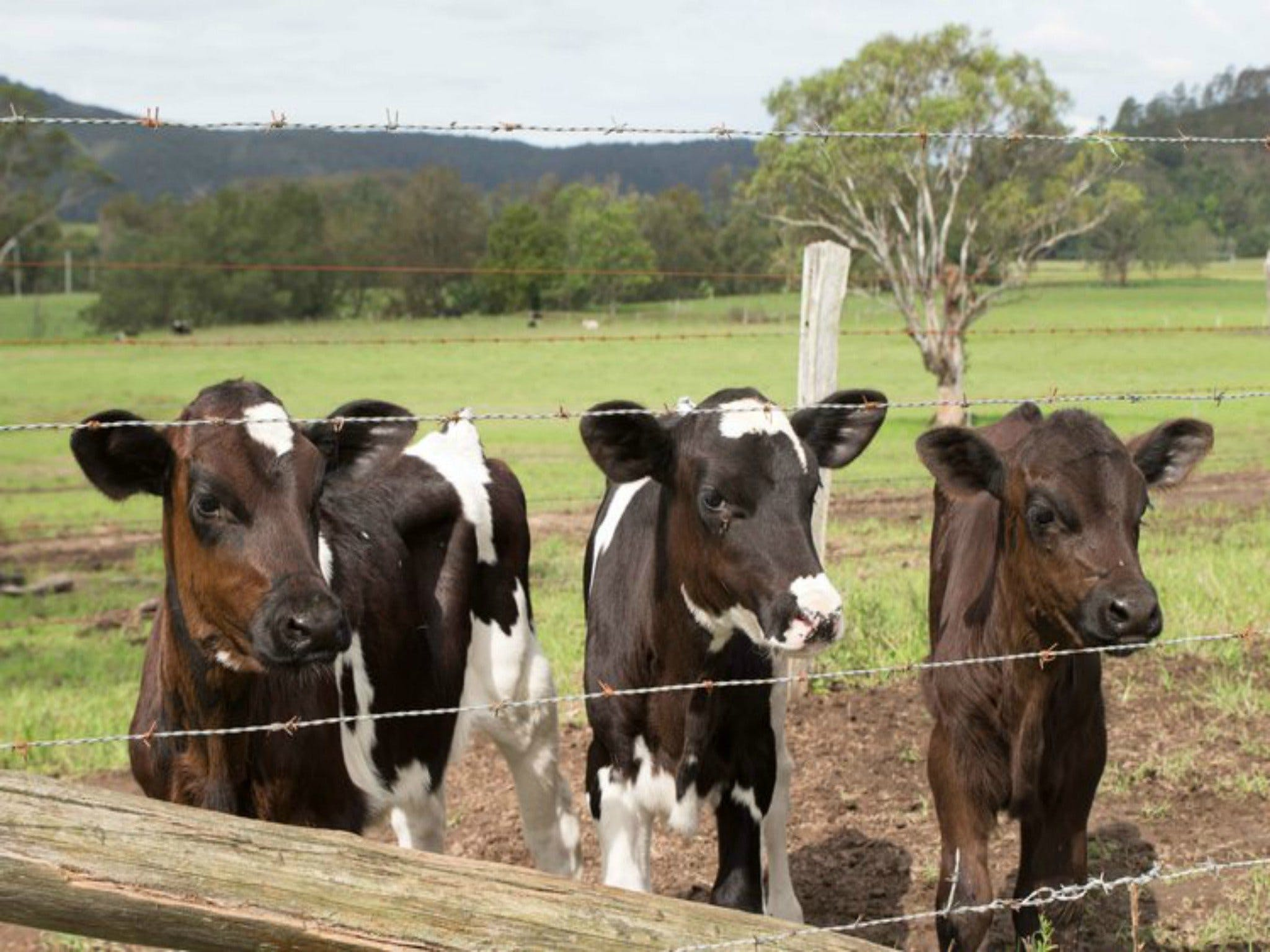 Bandon Grove Farm Tours - Wagga Wagga Accommodation