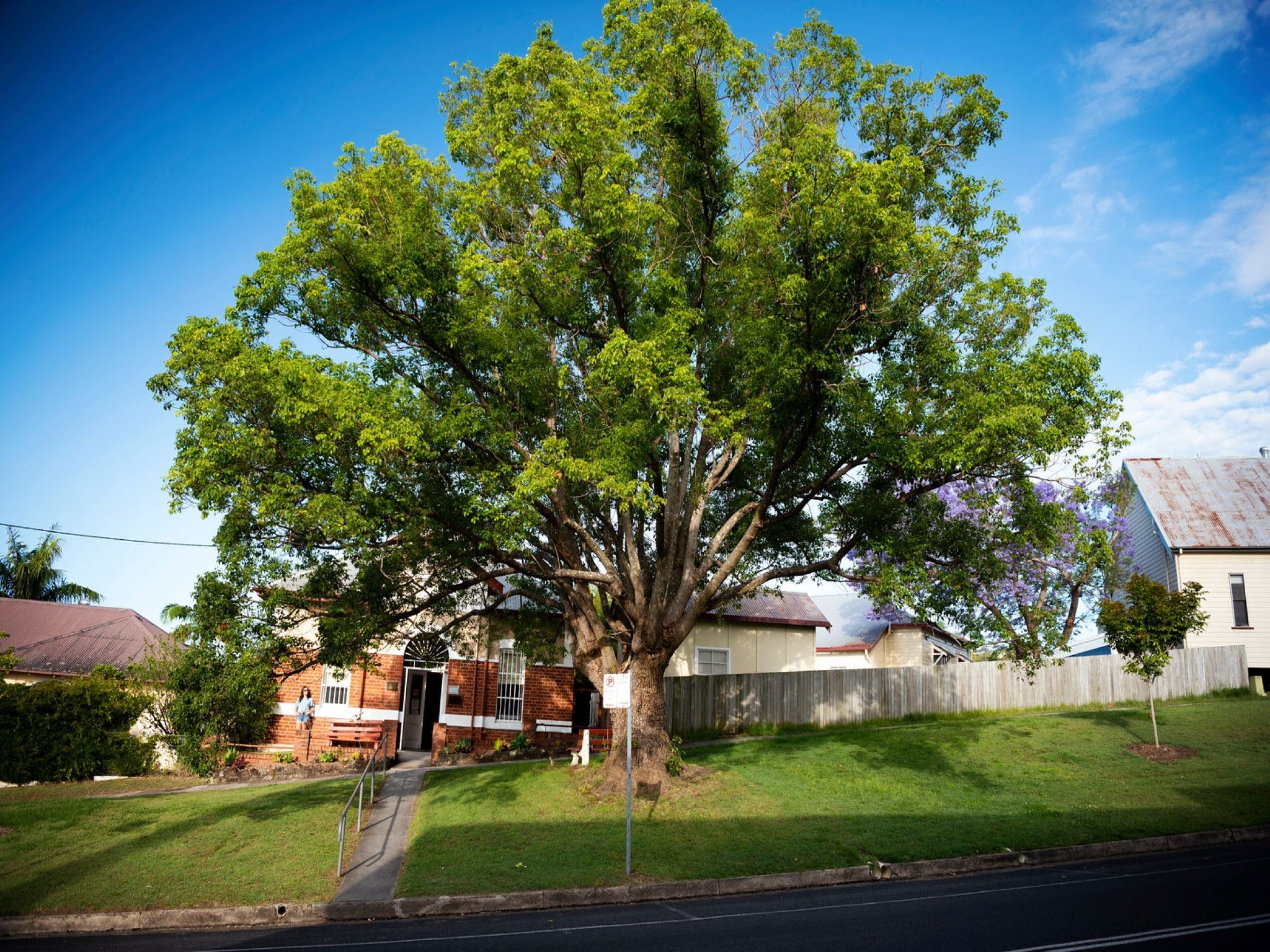 Big Bat Wildlife and Eco Festival - Wagga Wagga Accommodation