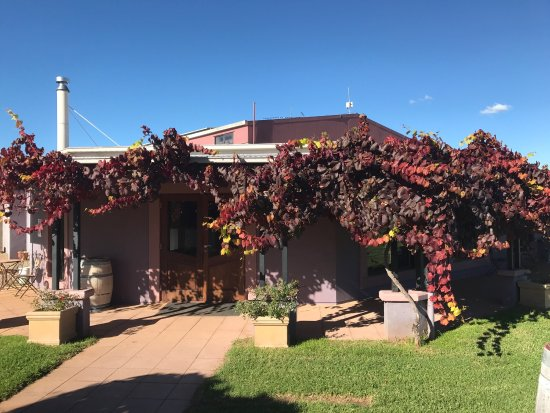 Jester Hill Wines - Wagga Wagga Accommodation